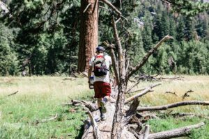 hiker on tree